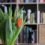 Systematyka tulipana